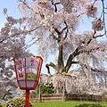 祇園 + 円山公園